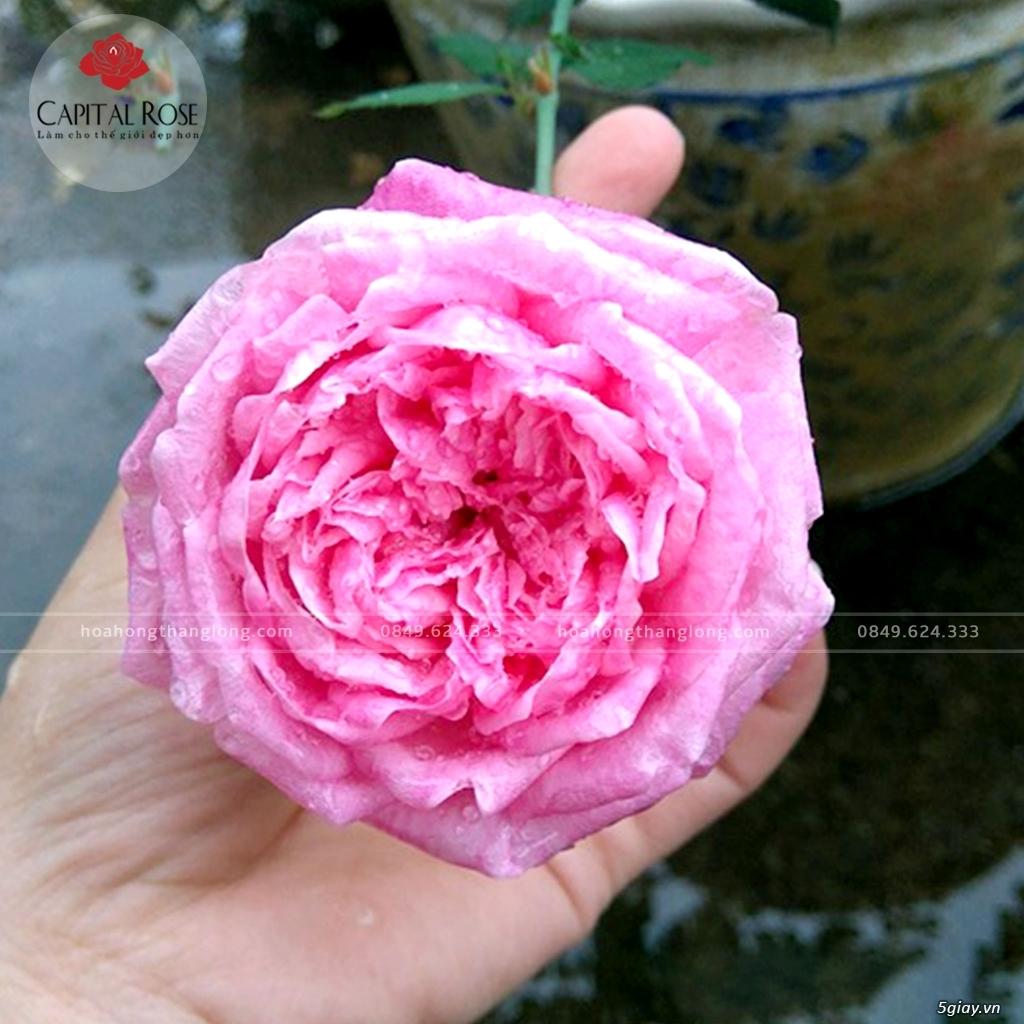 Vườn hồng Thăng Long tuyển nhân viên làm bàn phím