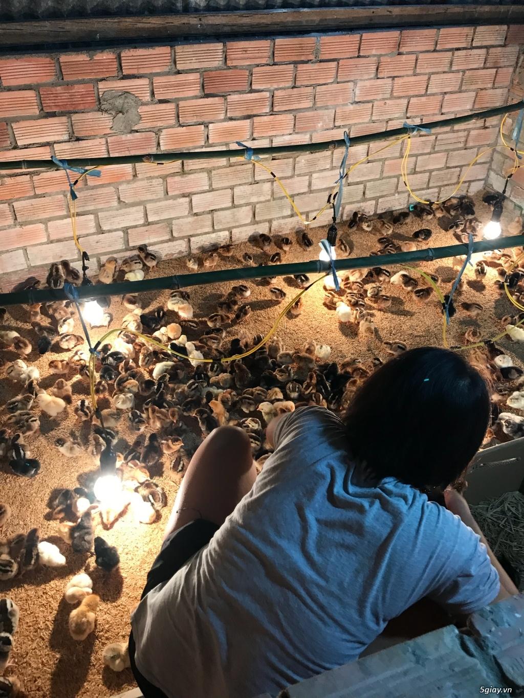 Cơ sở cung cấp giống gà ta thả vườn Thanh Bình Gò Công,Tiền Giang - 8