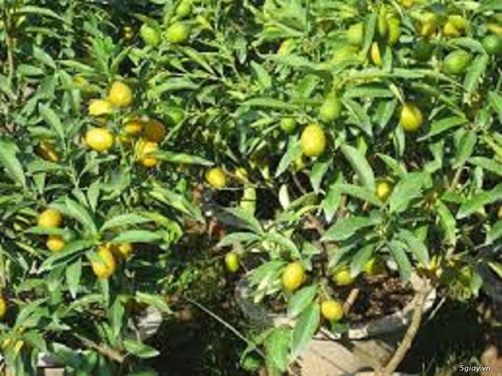 Tuyển dụng nam nữ chăm sóc cây ăn quả bao ăn ở