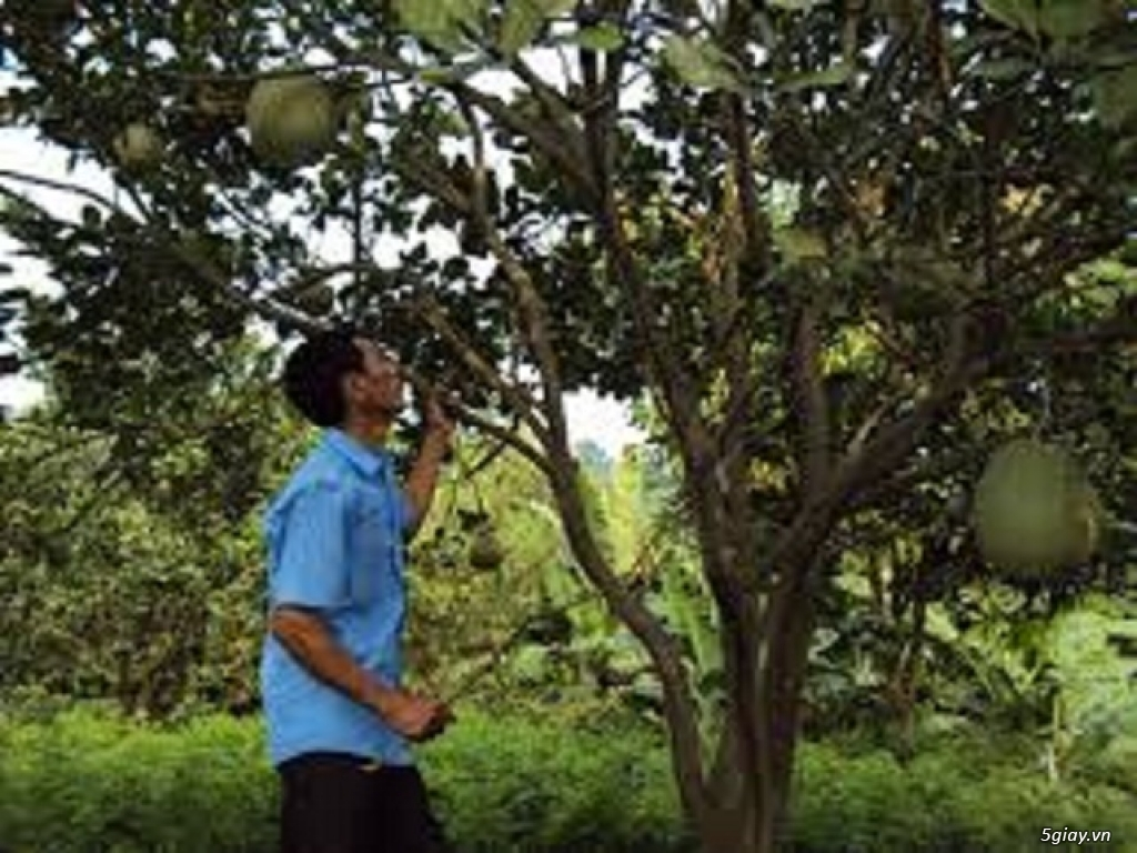 Tuyển dụng nam nữ chăm sóc cây ăn quả bao ăn ở - 1