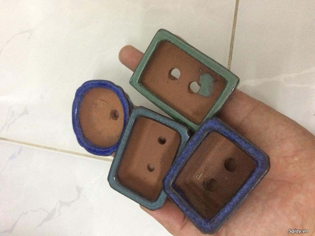 Bộ chậu bonsai siêu mini 4 cái - 2