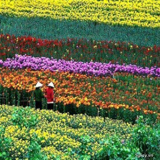 tuyển gấp nam nữ trồng hoa tại đà lạt( lương 7 triệu bao ăn ở)
