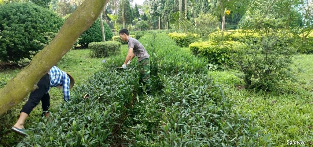 thiết kế và thi công cảnh quan nhà vườn, công ty tại Hà Nội