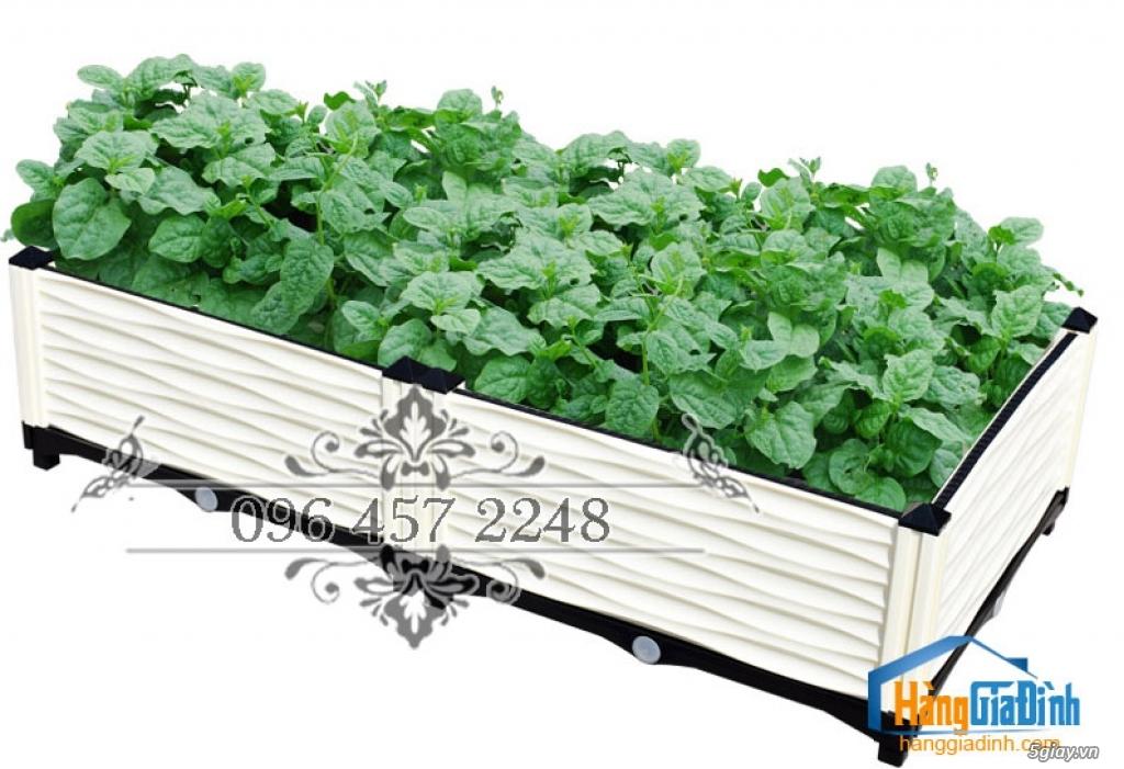 Chậu  ghép thông minh báo giá các mẫu chậu nhựa trồng rau , trồng cây