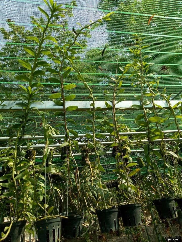 Lưới che nắng thái lan chuyên dùng cho cây cảnh, nhà vườn tại Hà Nội - 4