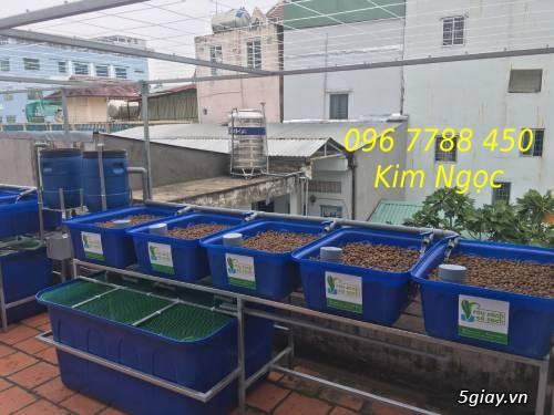 Thùng nhựa 1000 lít nuôi cá LHe 0967788450 Ngọc - 2