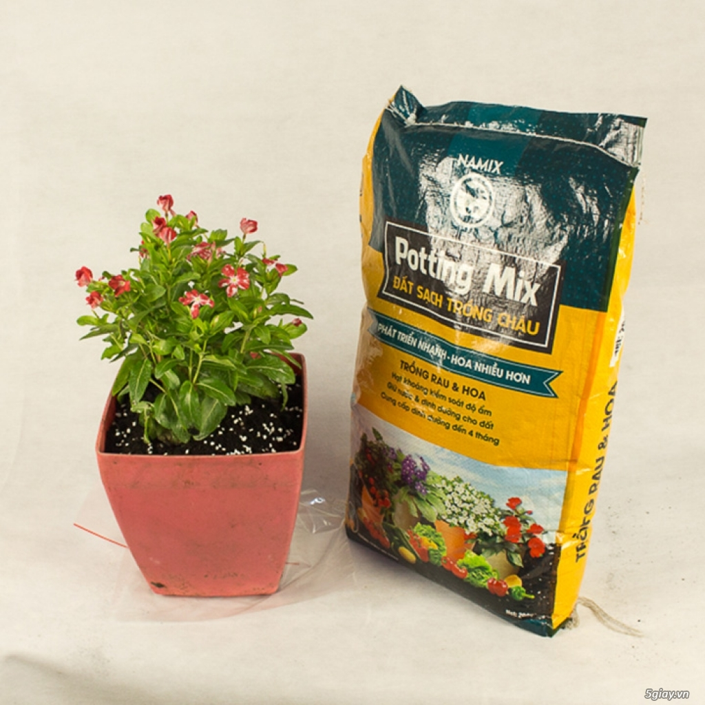 Đất sạch namix trồng rau trồng hoa - 1