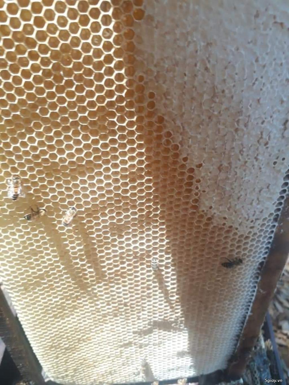 Mât ong hoa cafe 1 năm chỉ có 1 lần