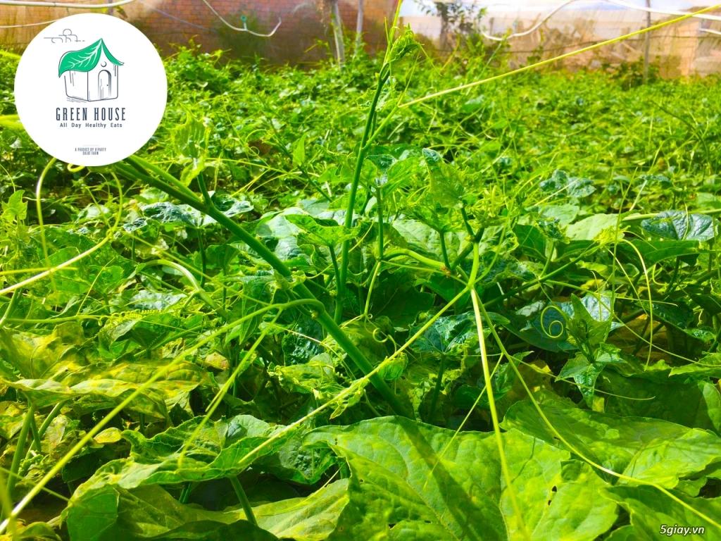 Healthy Green House: Rau - Củ - Quả (Sạch/Organic) & Suất Ăn Giảm Cân - 12
