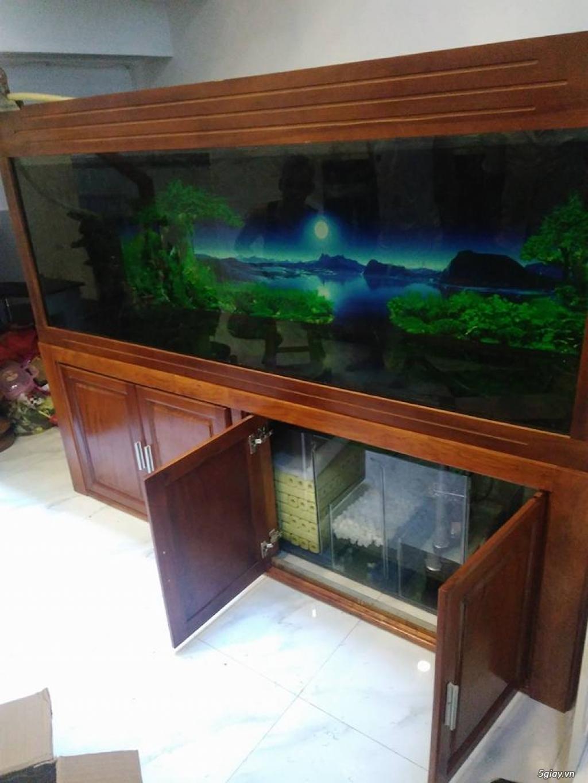 Chuyên Hồ Cá Cảnh, Hồ Thủy Sinh , Hồ cá rồng, Hồ Hải sản ..HCM - 21