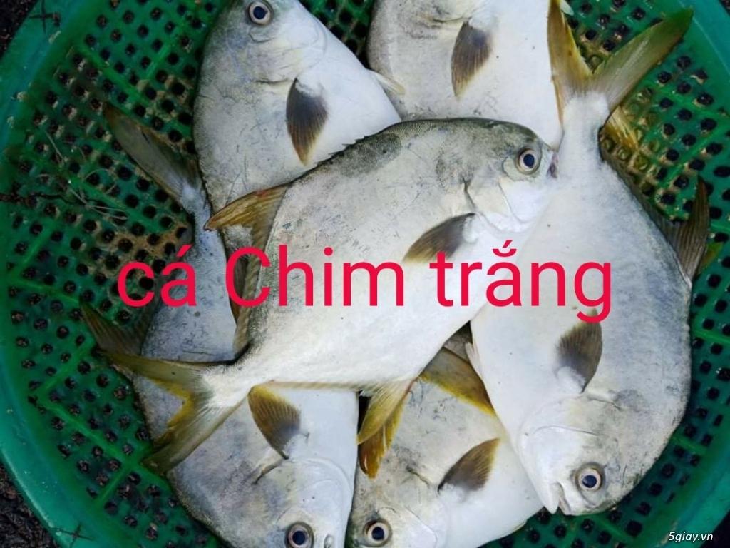 Ruột Hàu sữa Bình Định giá rẻ tại TP. HCM - 10