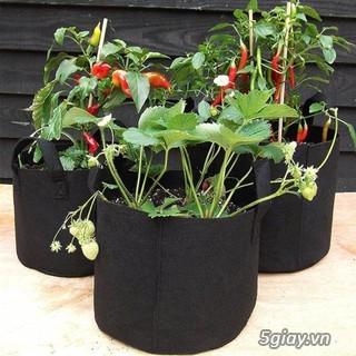 Túi vải địa kĩ thuật trồng cây