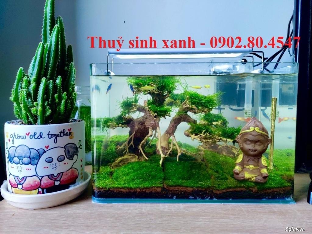 Hồ cá thuỷ sinh mini để bàn tại TP.hcm - 10