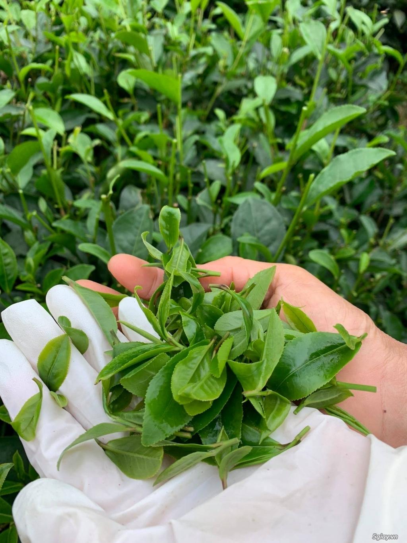 Trà Thái Nguyên 100% Nguyên chất, 150k/kg - 1