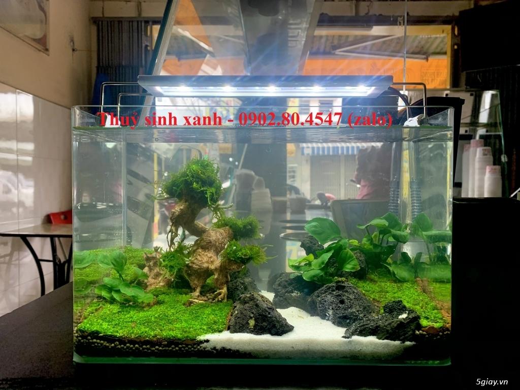 Hồ cá thuỷ sinh mini để bàn có tặng cá. - 9