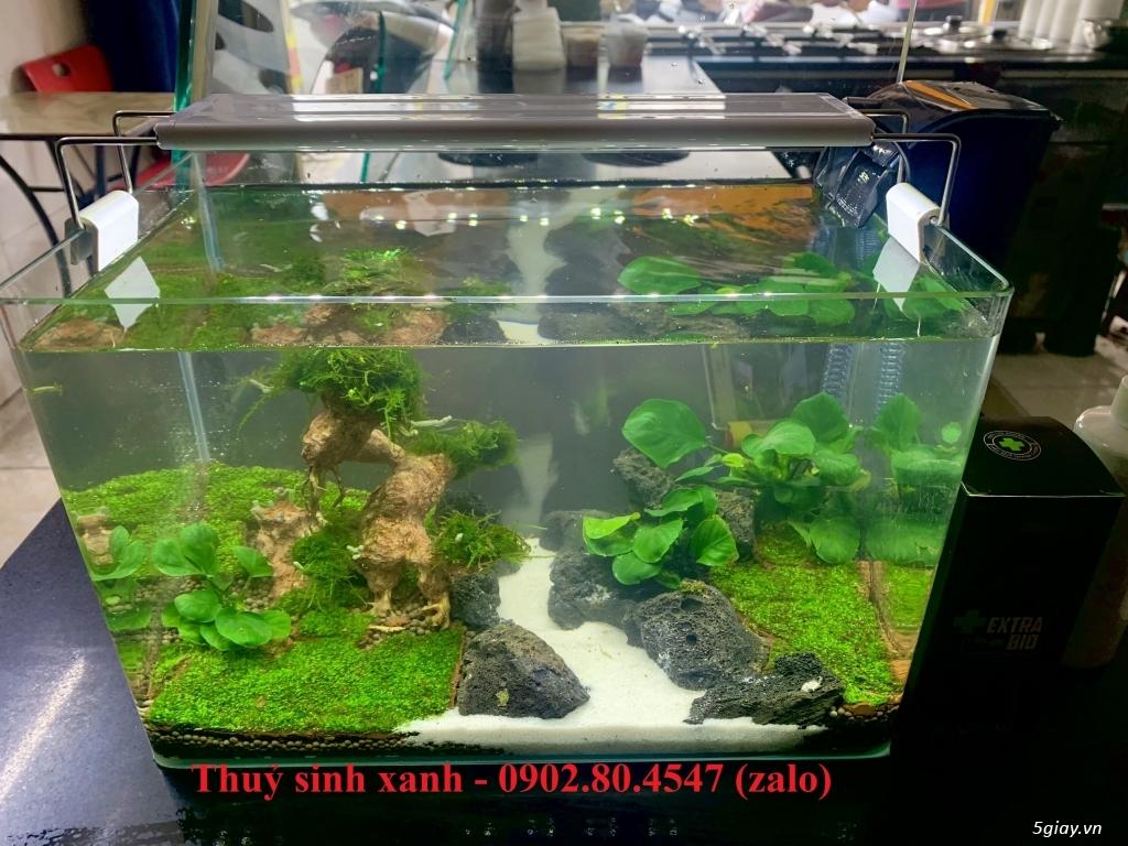Hồ cá thuỷ sinh mini để bàn có tặng cá. - 10