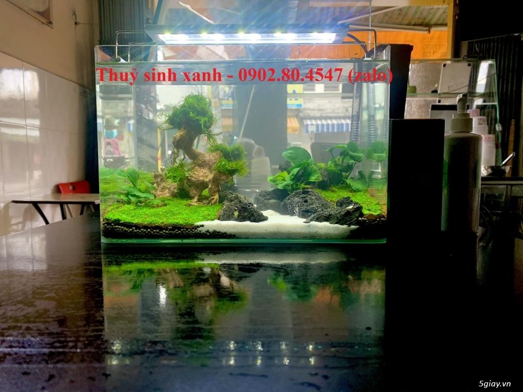 Hồ cá thuỷ sinh mini để bàn có tặng cá. - 11