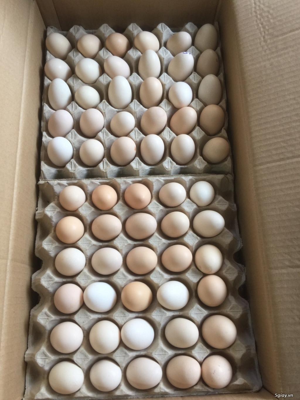 cần tìm đai lý, nhà phân phối trứng gà ác trên toàn quốc