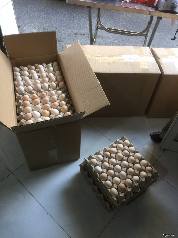 cần tìm đai lý, nhà phân phối trứng gà ác trên toàn quốc - 2