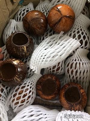 Cóng dừa cho cu gáy chất lượng màu sắc đẹp - 1