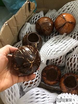 Cóng dừa cho cu gáy chất lượng màu sắc đẹp - 2