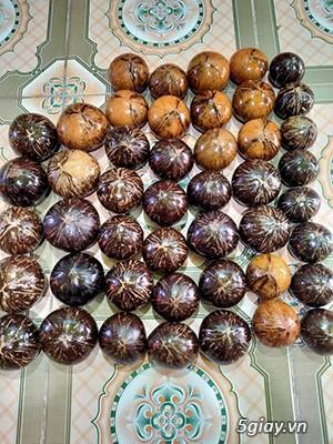 Cóng dừa cho cu gáy chất lượng màu sắc đẹp - 3