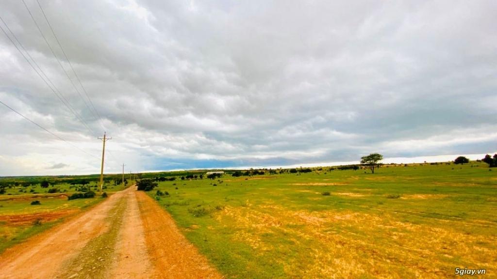 Đất Bình Thuận giá chỉ 70 nghìn/m2 DT 3000-2ha đất đẹp vuông vứt LH - 4