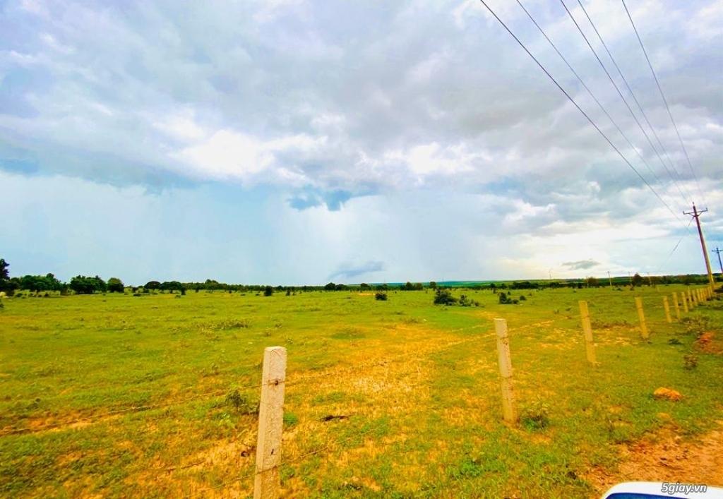 Đất Bình Thuận giá chỉ 70 nghìn/m2 DT 3000-2ha đất đẹp vuông vứt LH