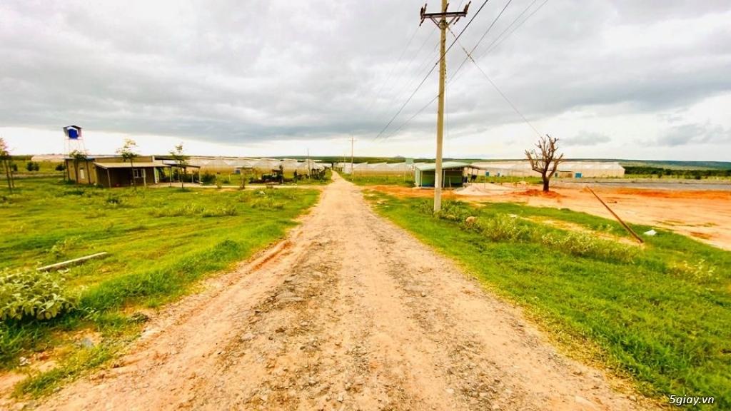 Đất Bình Thuận giá chỉ 70 nghìn/m2 DT 3000-2ha đất đẹp vuông vứt LH - 3