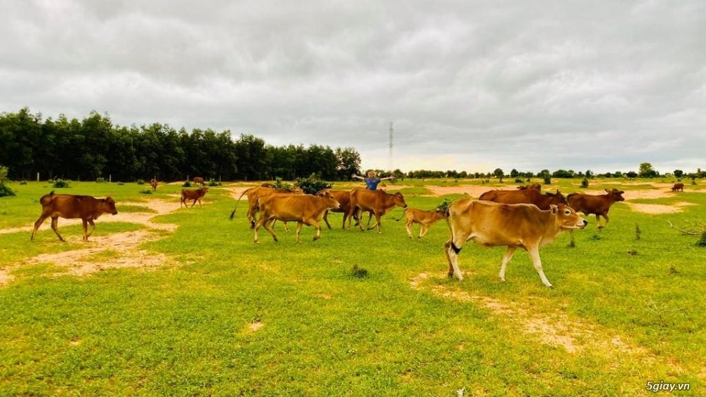 Đất Bình Thuận giá chỉ 70 nghìn/m2 DT 3000-2ha đất đẹp vuông vứt LH - 2