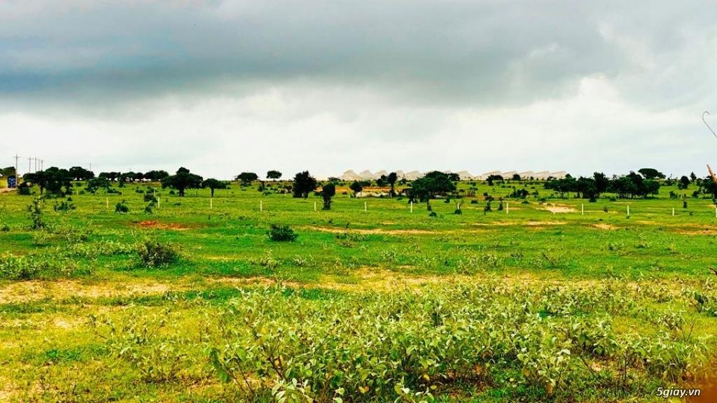 Đất Bình Thuận giá chỉ 70 nghìn/m2 DT 3000-2ha đất đẹp vuông vứt LH - 1